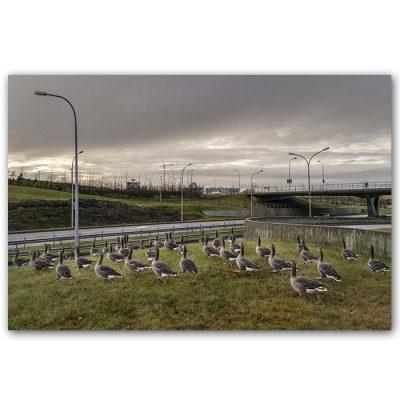 Islands - Boris Németh / digitálna fotografia v ráme