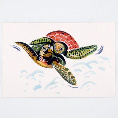 Korytnačky - Mexico / pohľadnica