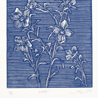 Linum tmavo modrý #1 - Martina Rötlingová linorytová grafika 21 x 30cm