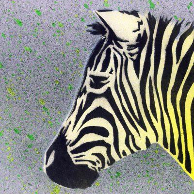 Zebra - obraz v plexi rámiku 21 x 30 cm