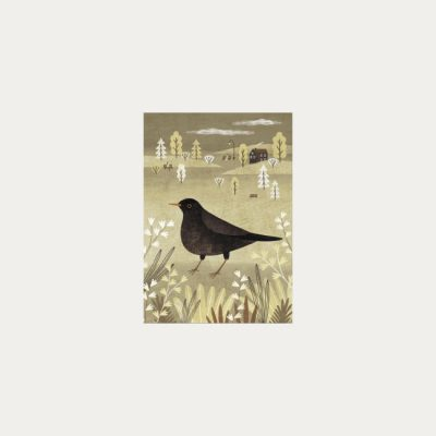 Drozd čierny - plagátik / obrázok A4
