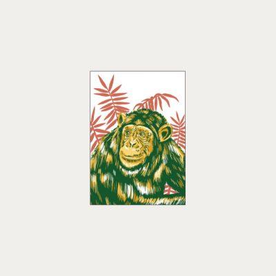 Šimpanz učenlivý - plagátik / obrázok A4