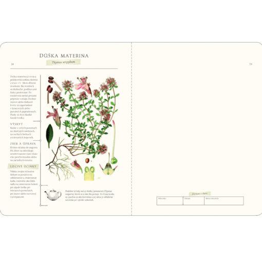 rodinny herbar rastlin