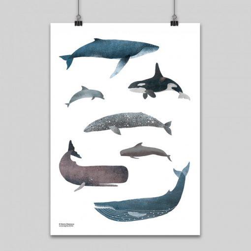 Veľryby – grafika / obrázok A2