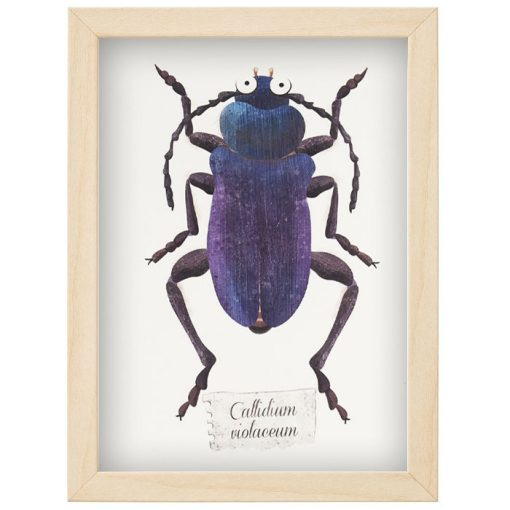 Chrobák Callidium - Hedviga Gutierrez / B6 grafika