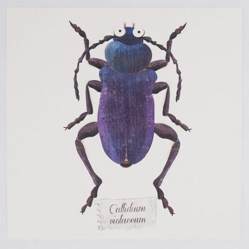 Chrobák Callidium - Hedviga Gutierrez / 23x23 grafika