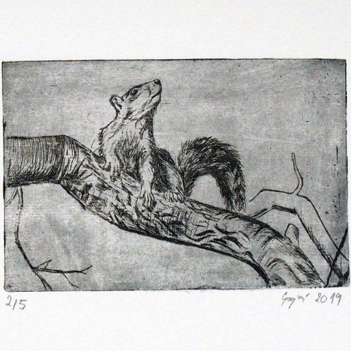 Veverička / hĺbkotlačová grafika