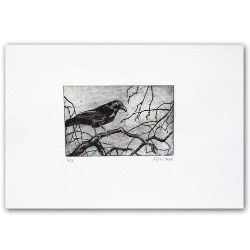 Vrana / hĺbkotlačová grafika
