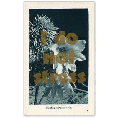 I do not stress - Pressink, Hlaváček jarní / letterpressová grafika