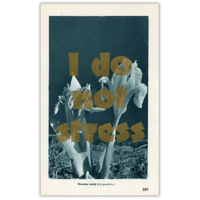 I do not stress - Pressink, Kosatec nízky / letterpressová grafika