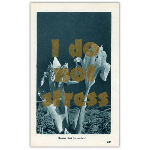I do not stress - Pressink, Kosatec nízky / letterpressová grafika