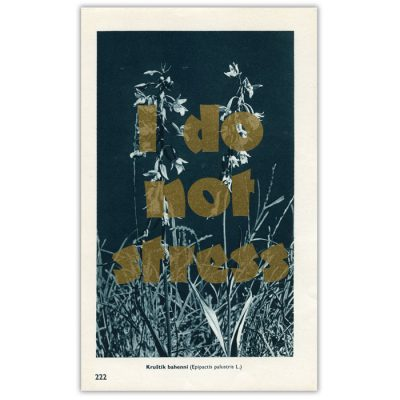 I do not stress - Pressink, Kruštik bahenní / letterpressová grafika