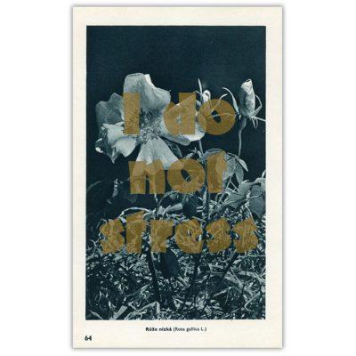 I do not stress - Pressink, Růže nízka / letterpressová grafika