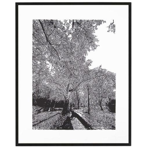 Bratislava Zámocká záhrada - Tlatchene, 50 x 40 cm / linorytová grafika