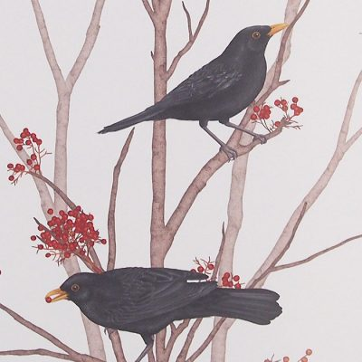 Blackbird on rowan twig 2 - Jana Michalovičová / grafika