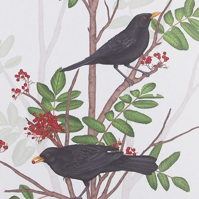 Blackbird on rowan twig 1 - Jana Michalovičová / grafika
