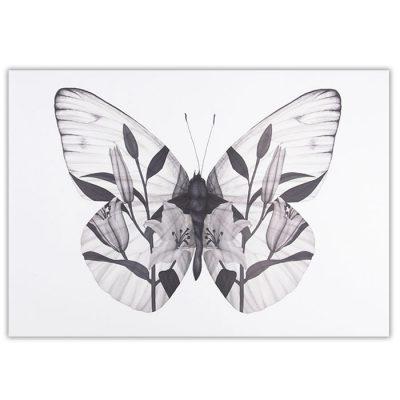 Butterfly - Jana Michalovič / grafika