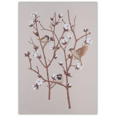 Sparrow on cotton plant 2 - Jana Michalovičová / grafika