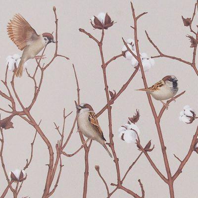 Sparrow on cotton plant - Jana Michalovičová / grafika