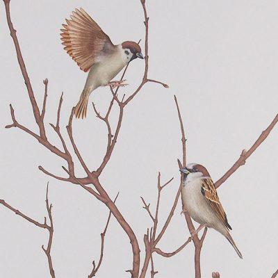Sparrow on twig 1 - Jana Michalovičová / grafika